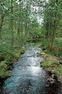 Im Naturschutzgebiet Eyachtal