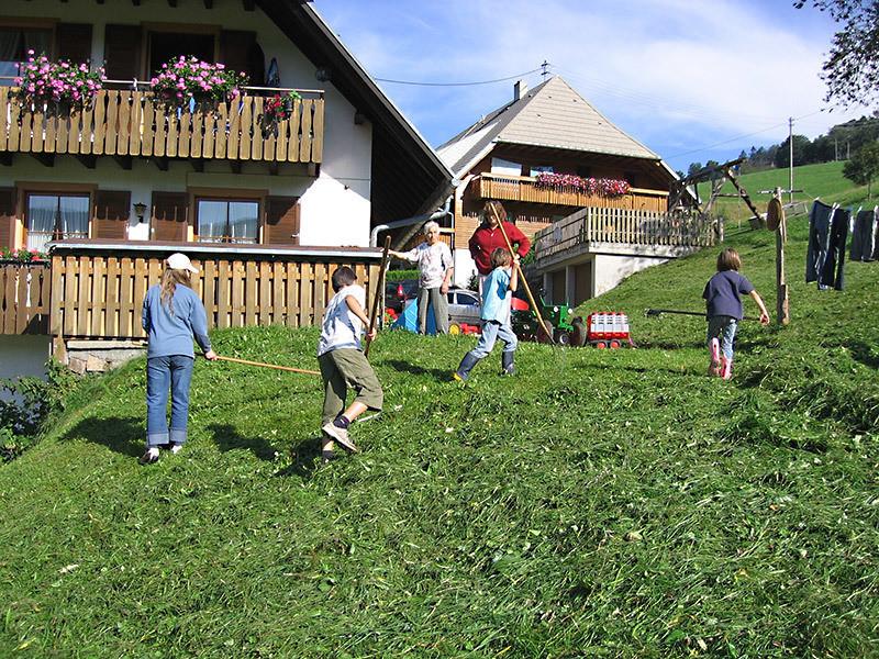 Harzlochhof Munstertal Im Schwarzwald Ferienwohnungen Bauernhof