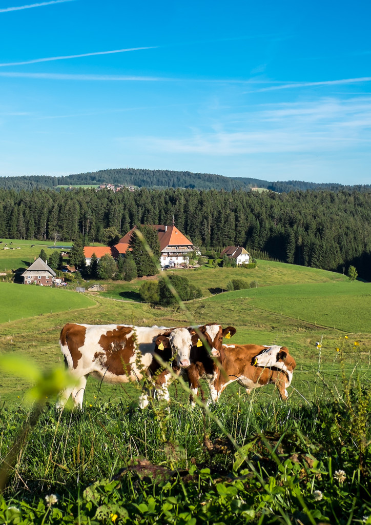Wellness Schwarzwald F r Singles - Single holidays